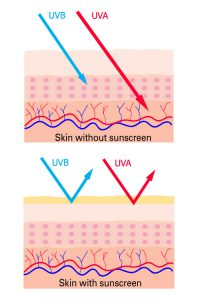 Skincare Routine - Sunscreen